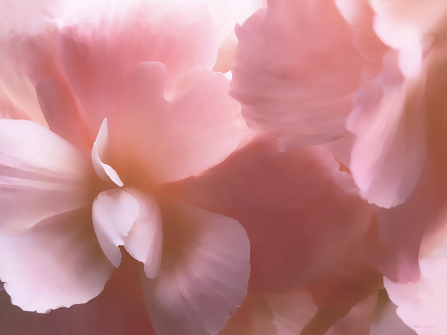 Begonia Photograph - Pink Begonia Floral by Jennie Marie Schell