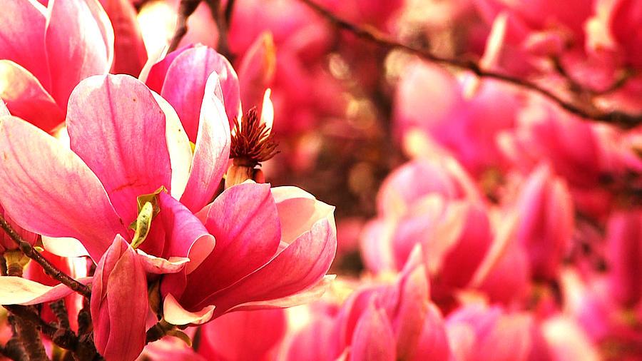 Pink Photograph - Pink by Benjamin Prater