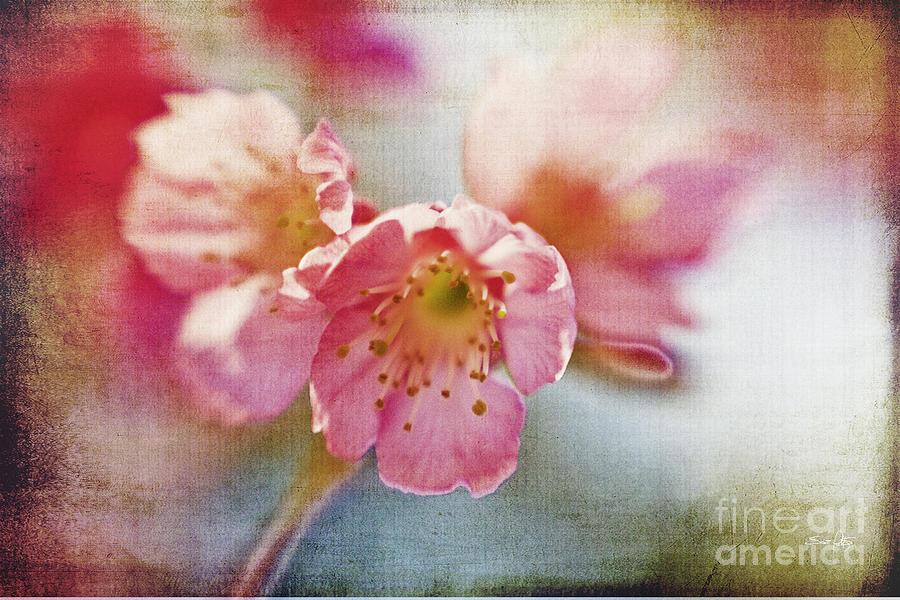 Lensbaby Photograph - Pink Blossom by Scott Pellegrin