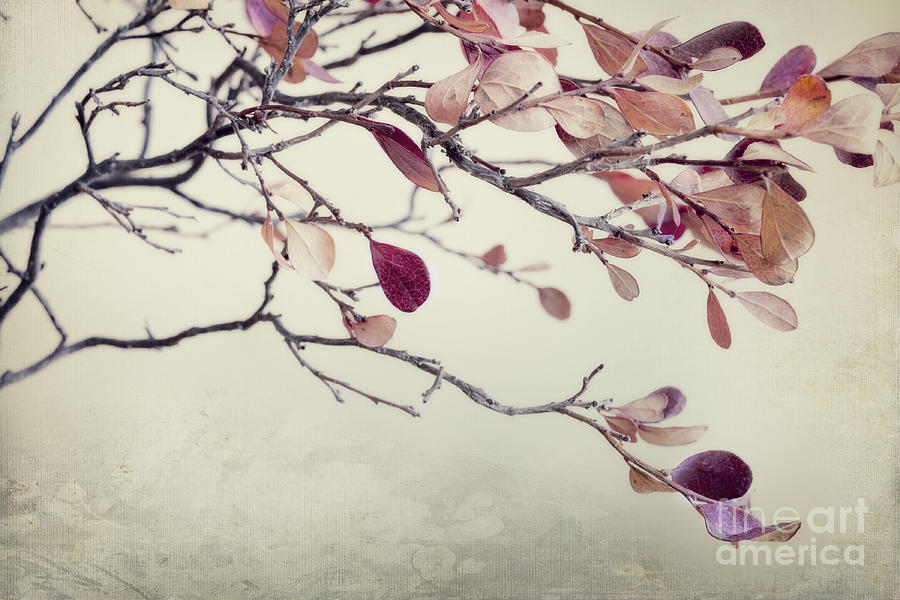 Leaves Photograph - Pink Blueberry Leaves by Priska Wettstein