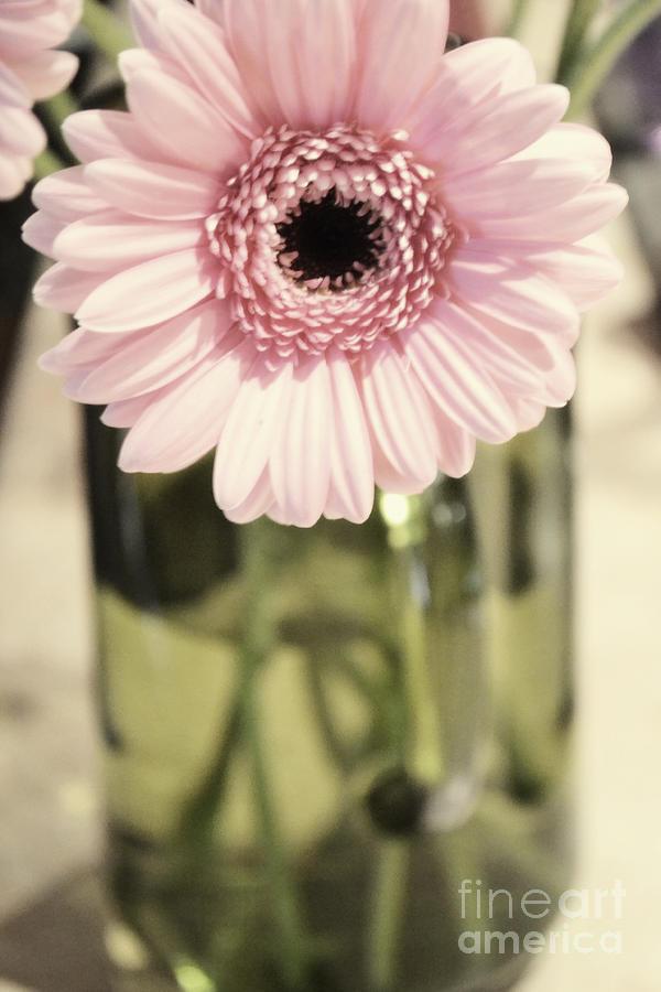 Pink Blush by Traci Cottingham