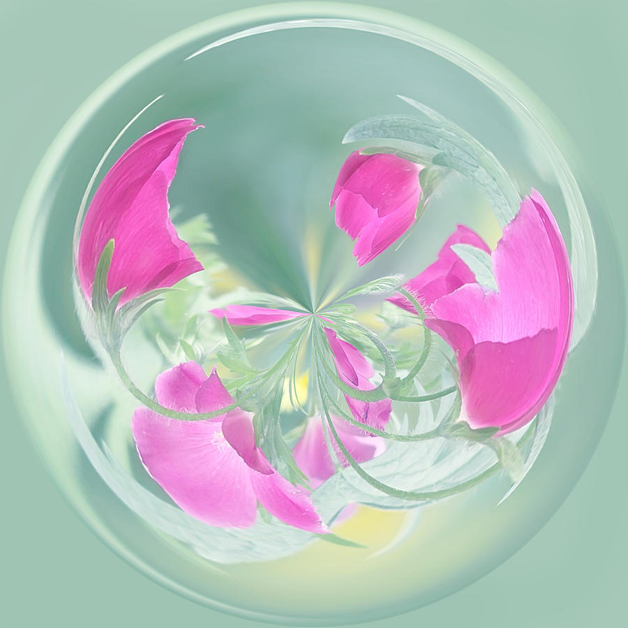 Orb Photograph - Pink California Poppy Orb by Kim Hojnacki