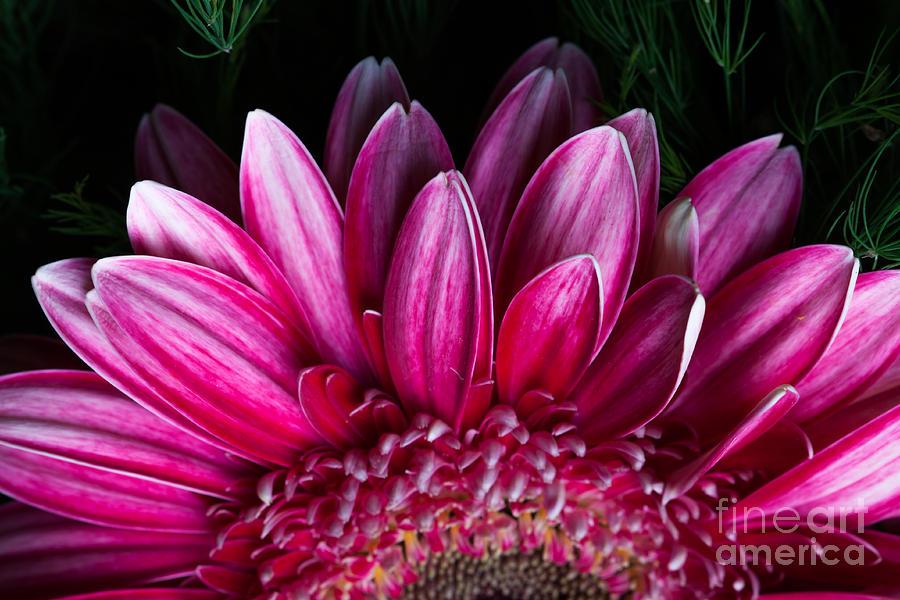 Pink Photograph - Pink by Carolina Mendez