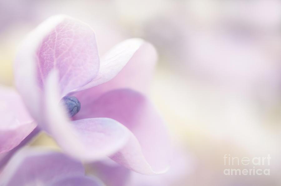Garden Photograph - Pink Cloud by Anne Gilbert