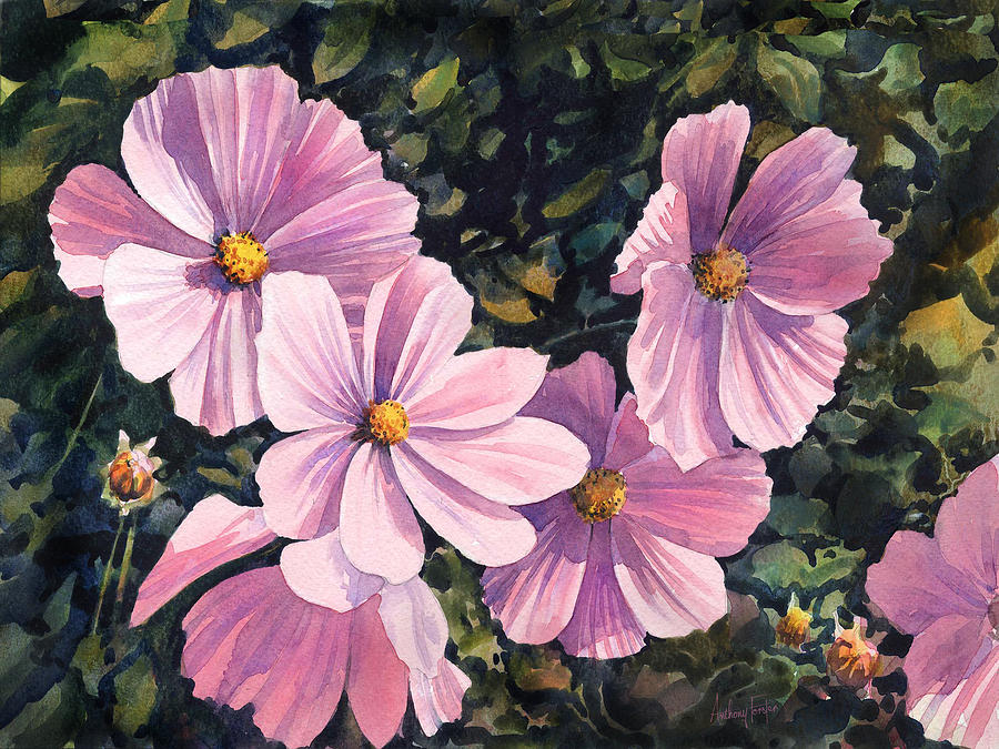 Cosmos Painting - Pink Cosmos by Anthony Forster