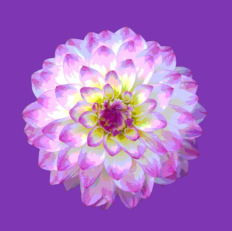 Dahlia Digital Art - Pink Dahlia Posterized On Purple. by Rosemary Calvert