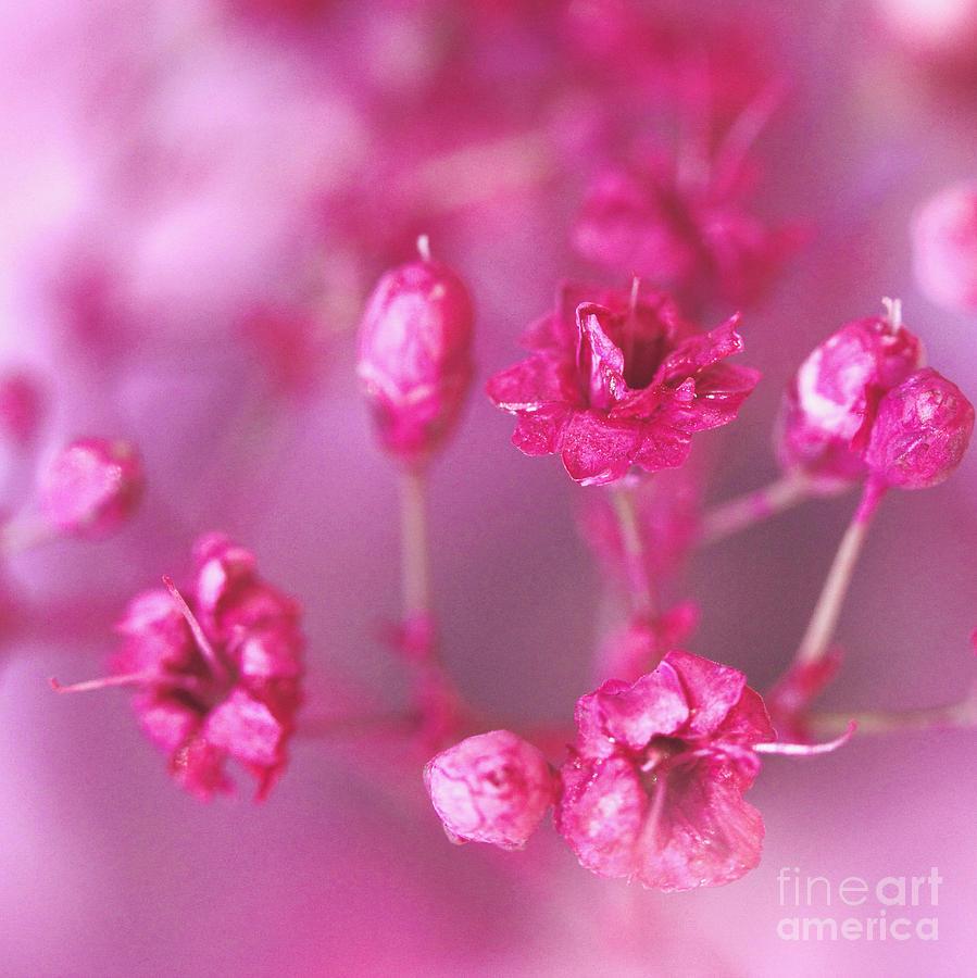 Pink Photograph - Pink Dreams by Karin Ubeleis-Jones