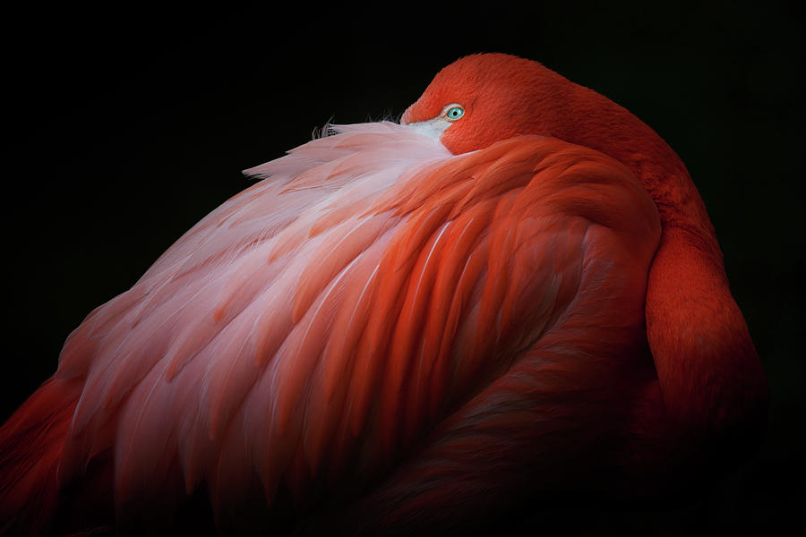 Pink Flamingo Photograph by Billy Currie Photography