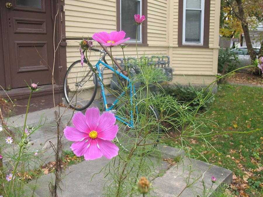 Pink Flower Blue Bike by Alan Chandler