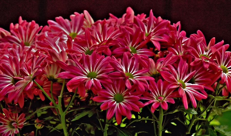 Flowers Photograph - Pink Flowers by Elery Oxford