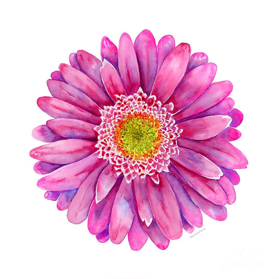 Pink Gerbera Daisy Painting By Amy Kirkpatrick