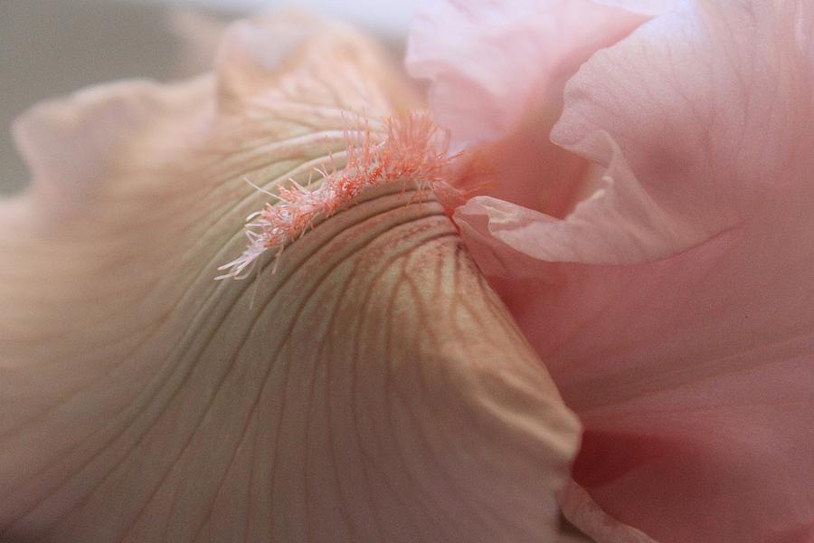 Pink Goddess Photograph