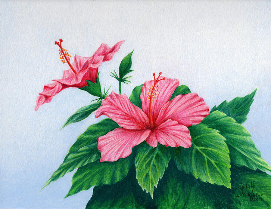 Pink Hibiscus Drawing By Wolf Daughter