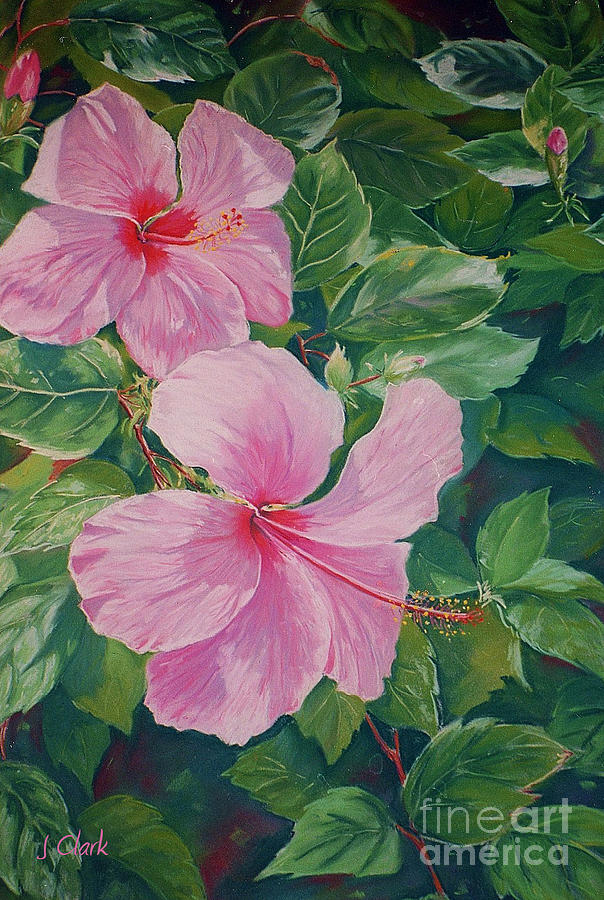 Painting Painting - Pink Hibiscus by John Clark
