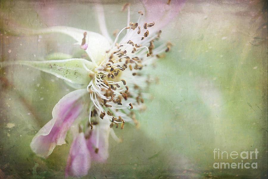 Flower Photograph - Pink Impression by Teresa Zieba