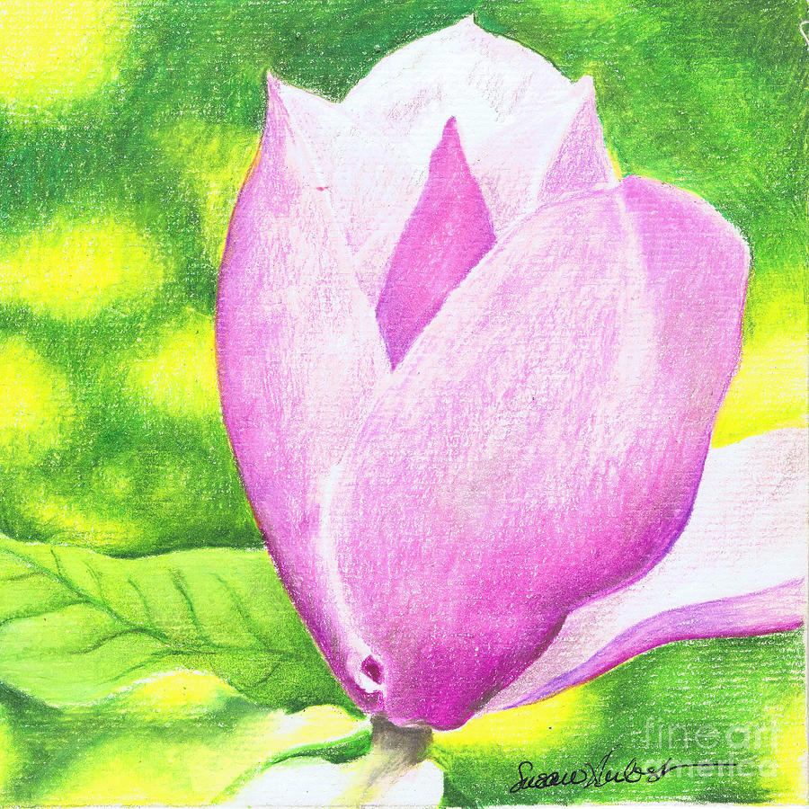 Pink Painting - Pink Magnolia by Susan Herbst