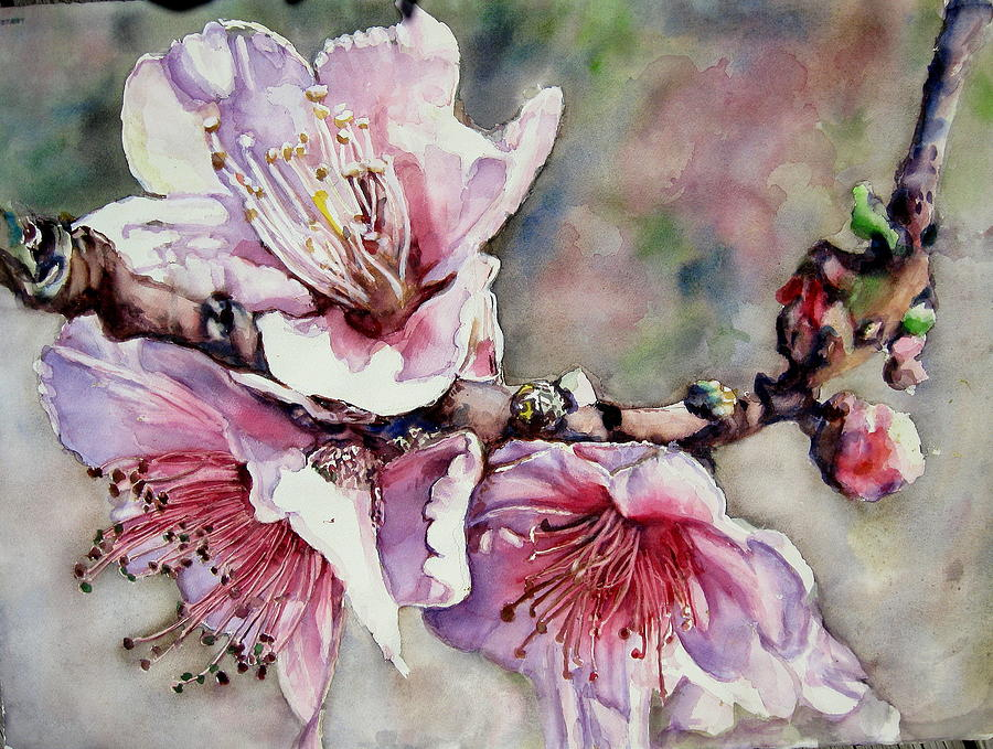 Flower Painting - Pink Magnolias by June Conte Pryor