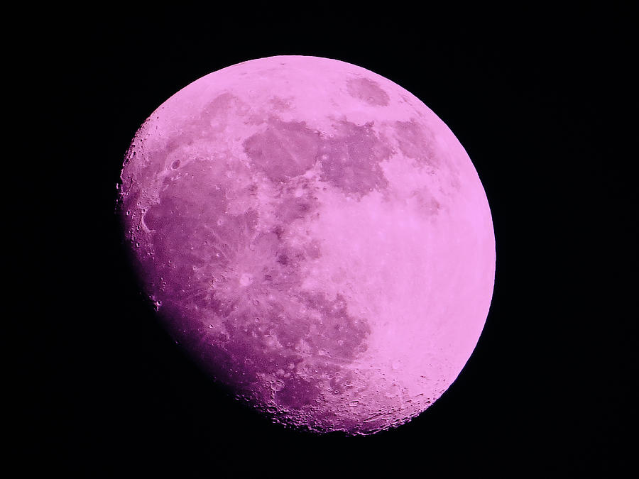 The Moon Photograph - Pink Moon by Tom Gari Gallery-Three-Photography