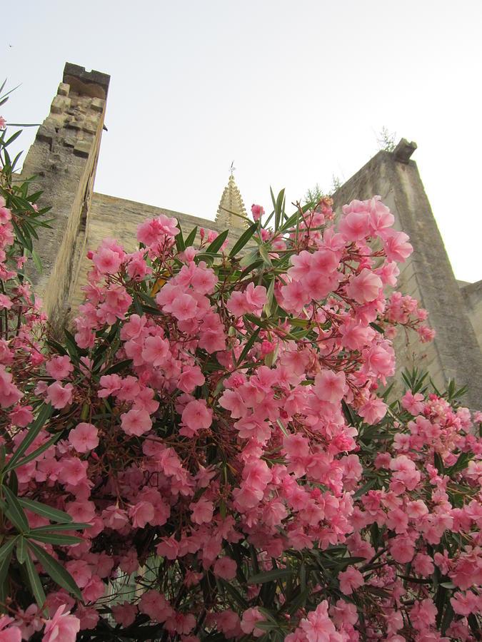Pink Photograph - Pink Oleander by Pema Hou