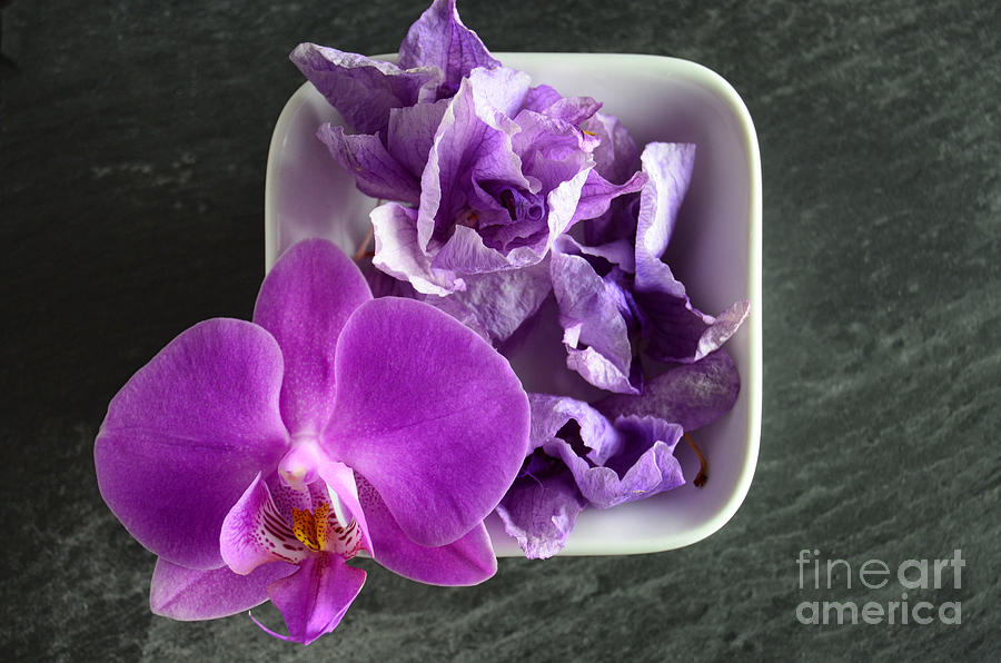 Pink Orchids With Dried Flowers In A White Bowl Photograph
