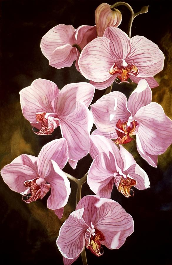 Flower Painting - Pink Phalaenopiss Orchids by Alfred Ng