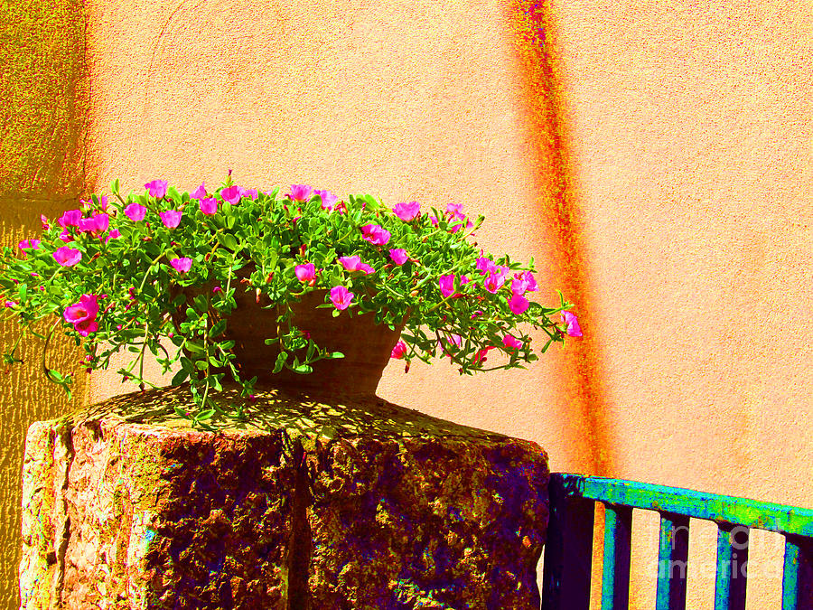 Flowers Photograph - Pink Potted Flowers And Bench by Tina M Wenger