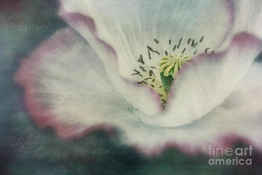 Poppy Photograph - Pink Rimmed Beauty by Priska Wettstein