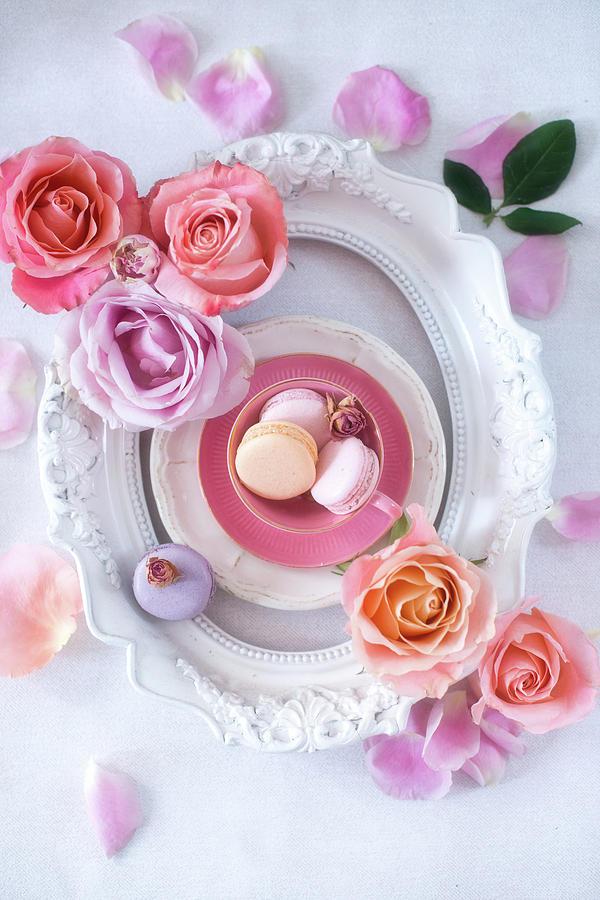 Pastel Photograph - Pink Romance by Elena Karagyozova