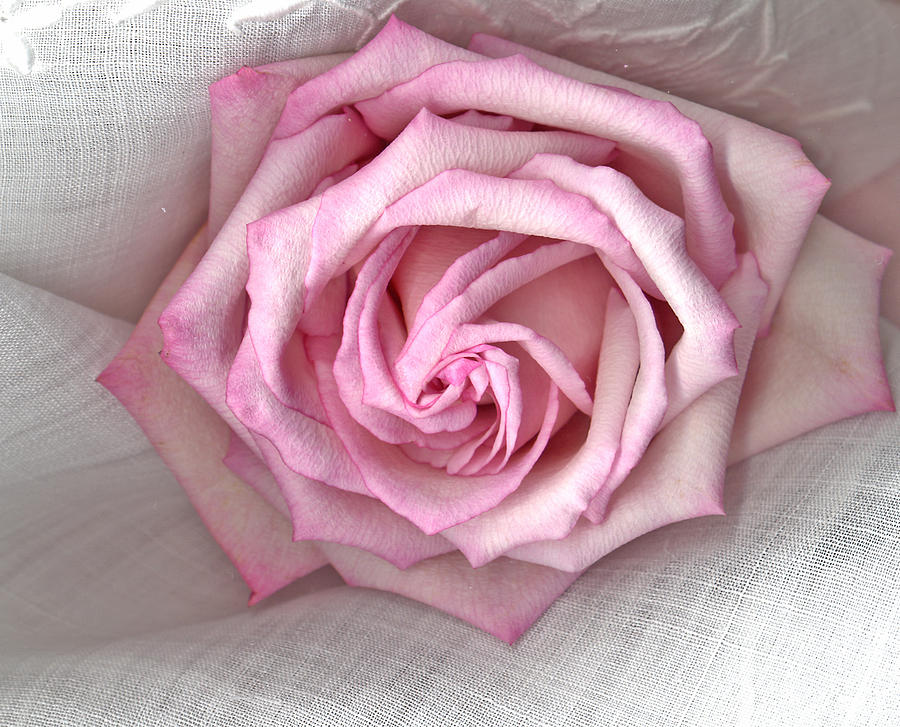 Rose Flower Photograph - Pink Rose And Linen by Sandra Foster