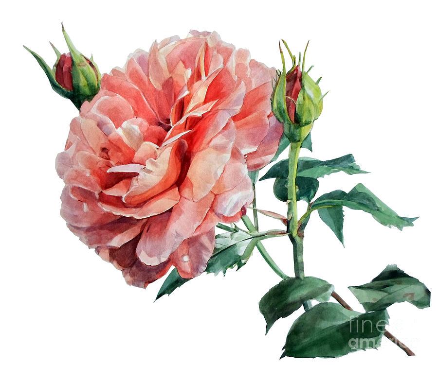 Pink Rose Odette Painting