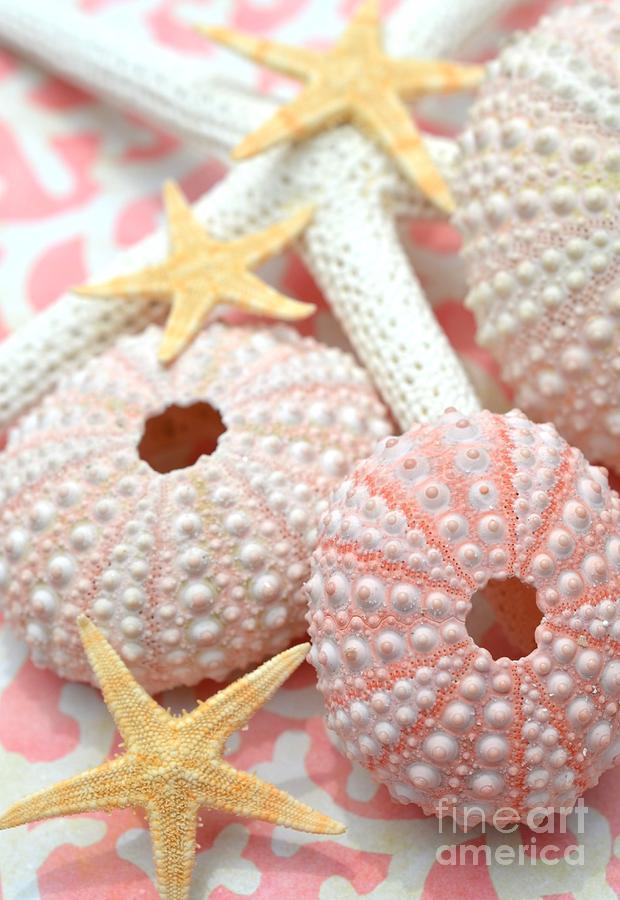 Sea Urchins Photograph - Pink Sea Urchins by Carol McGunagle