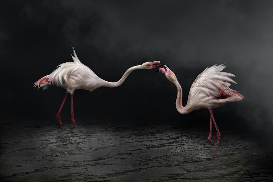 Birds Photograph - Pink Strategy by Martine Benezech