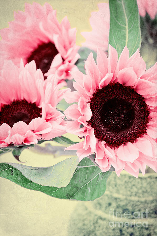 Vase Photograph - Pink Sunflowers by Angela Doelling AD DESIGN Photo and PhotoArt