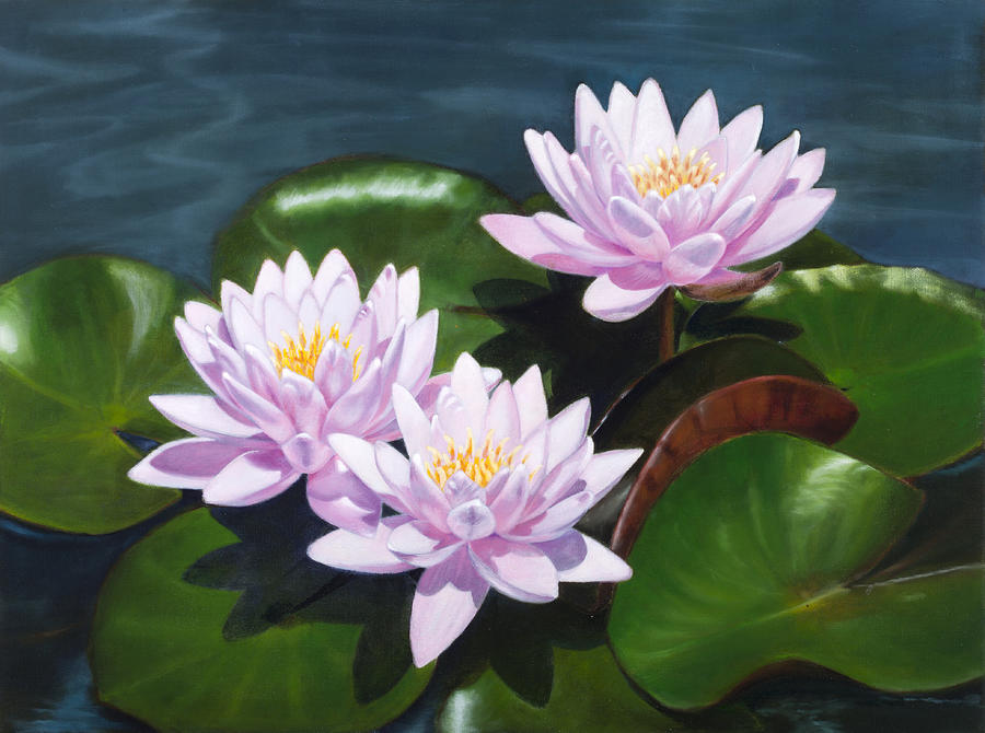 Pink Water Lilies - Oil Painting On Canvas Painting by ...