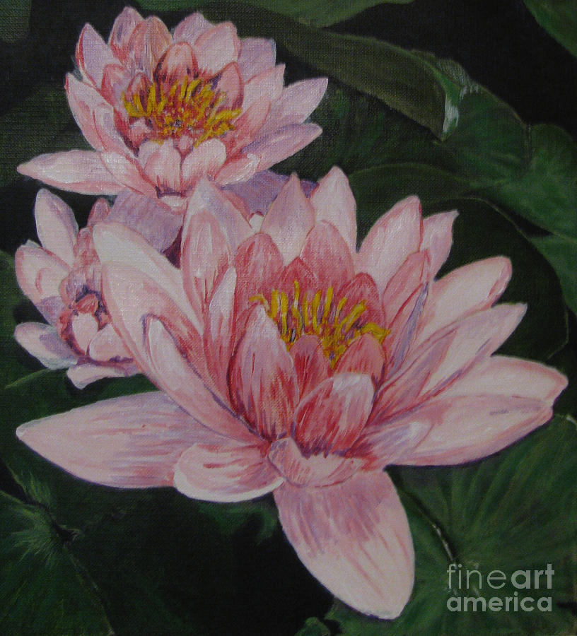 Flower Painting - Pink Waterlily by Nancie Johnson