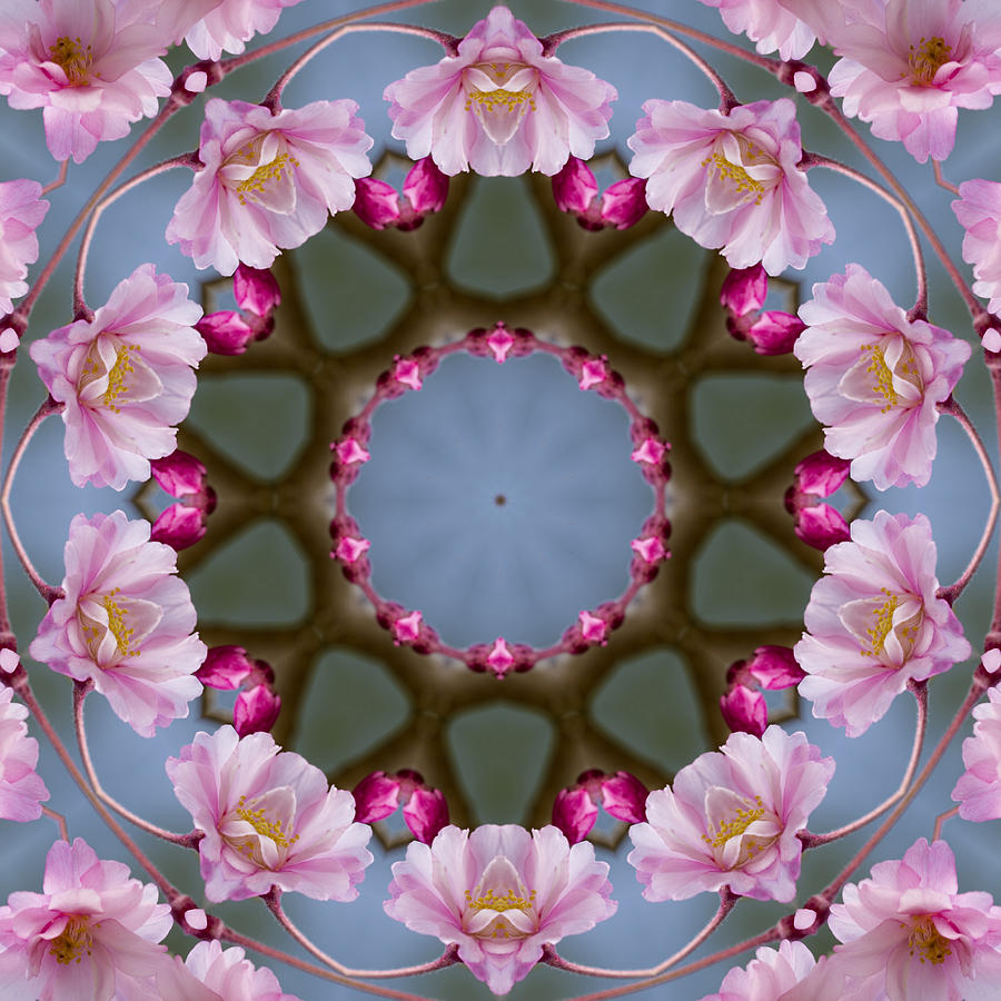 Pink Photograph - Pink Weeping Cherry Blossom Kaleidoscope by Kathy Clark