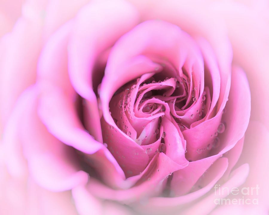 Flora Photograph - Pinkness by Edmund Nagele