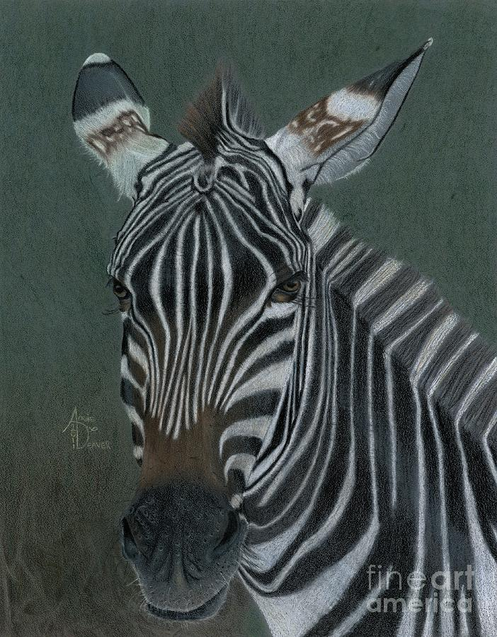 Zebra Drawing - Pinny by Angie Deaver