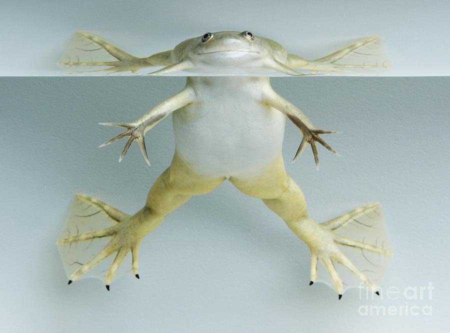 Pippi Frogstocking by Dan Suzio