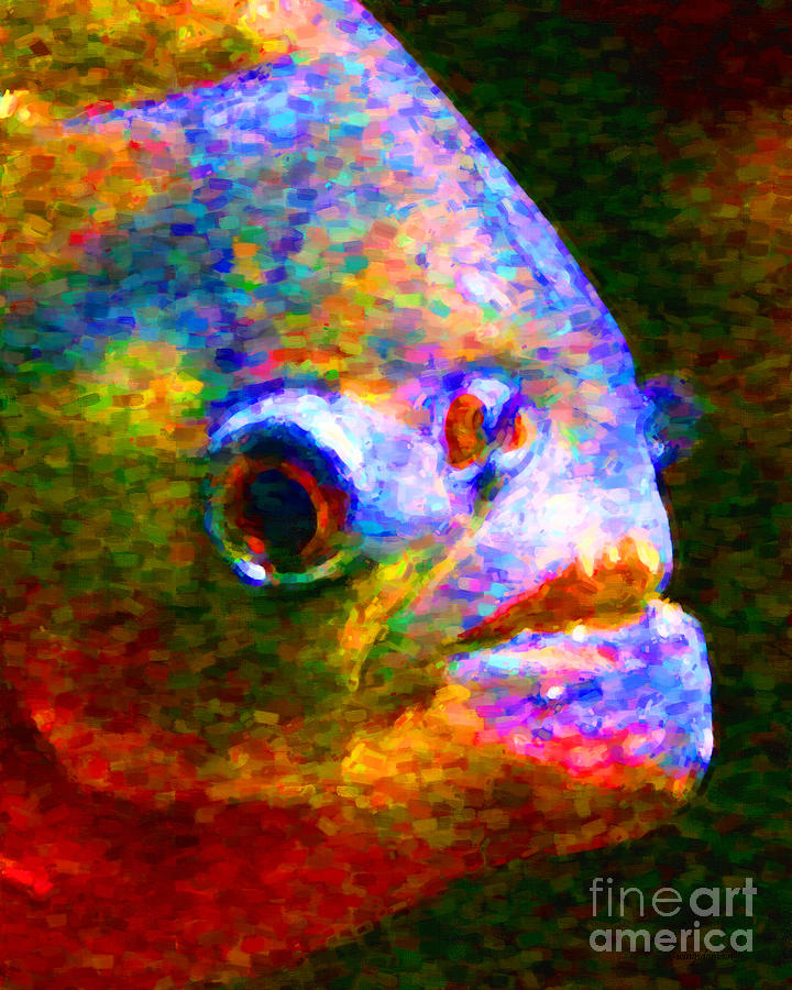 Florida Photograph - Piranha by Wingsdomain Art and Photography