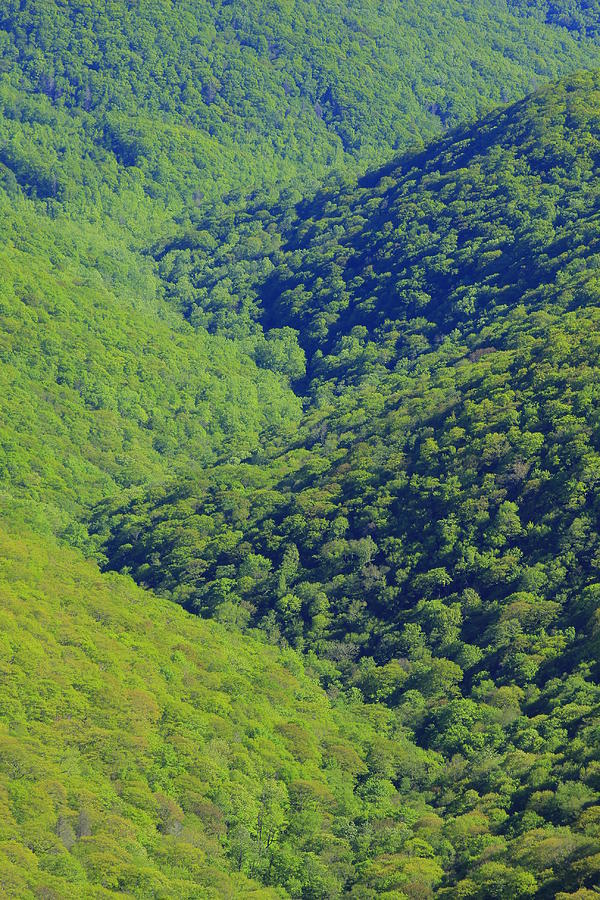 pisgah forest chat Welcome to the rotary club of pisgah forest rotary club of pisgah forest is one of 33,000 rotary clubs worldwide we are in rotary district 7670 in pisgah forest, transylvania county in western north carolina.