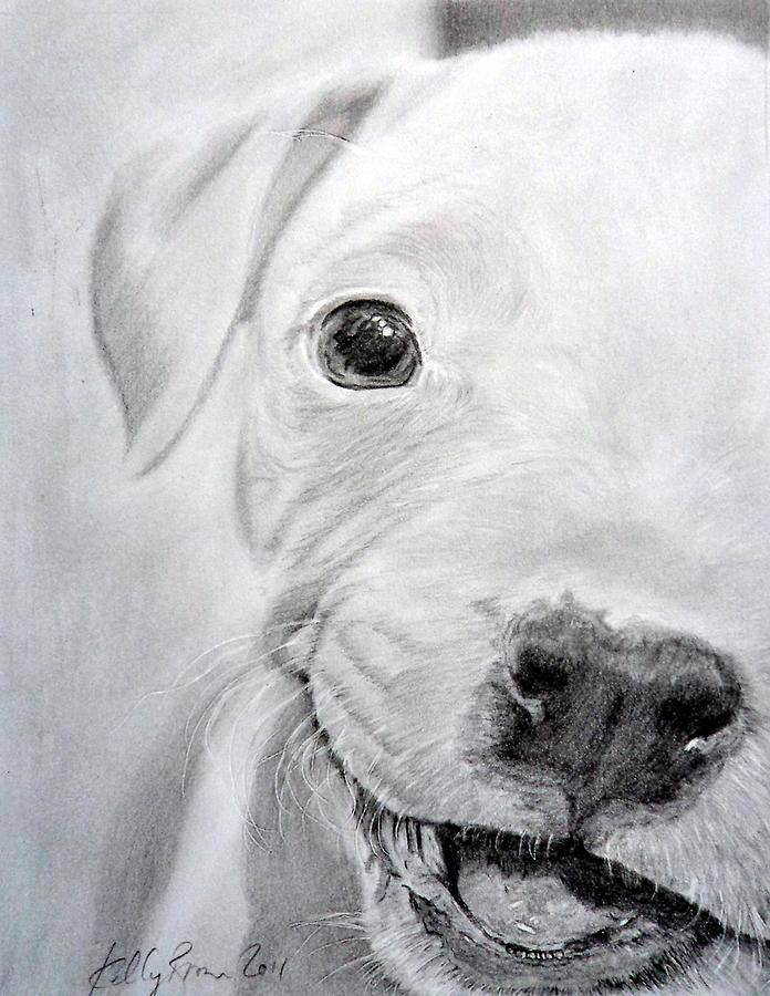 Pitbull Drawing - Pit-bull Puppy by Skyrah J Kelly