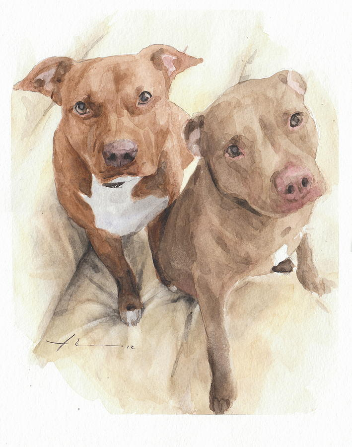 Pitbulls Watercolor Portrait Drawing by Mike Theuer