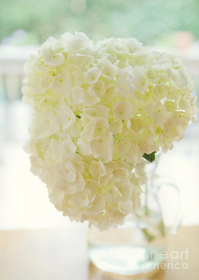 Floral Photograph - Pitcher Of Hydrangeas by Kay Pickens