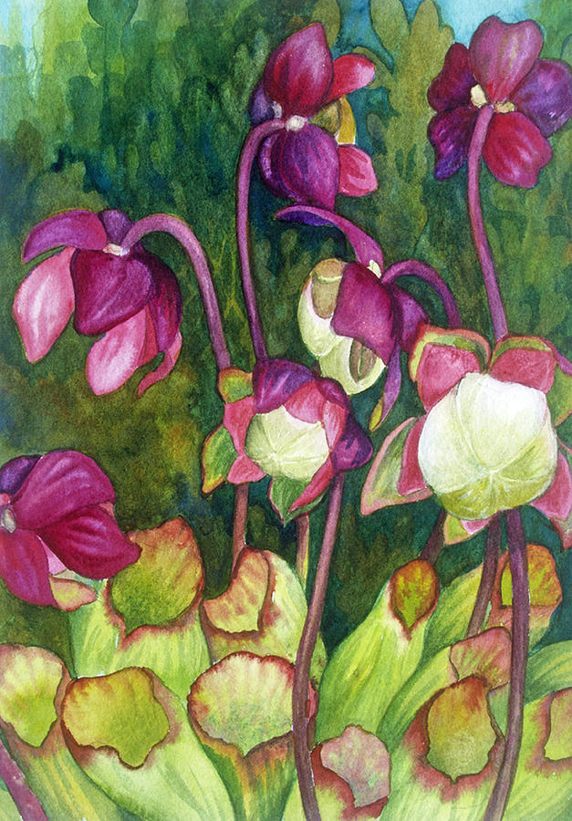 Flowers Painting - Pitcher Plant Flowers by Helen Klebesadel