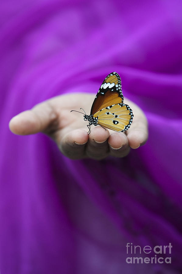 Indian Girl Photograph - Plain Tiger Butterfly by Tim Gainey
