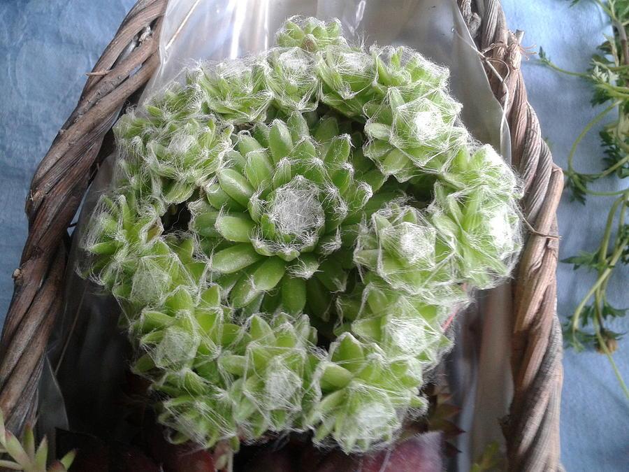 Plant Photograph - Plant 1 by Fladelita Messerli-