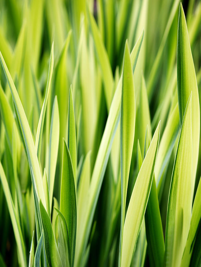 Plant Photograph - Plant Abstract 3 by Rebecca Cozart