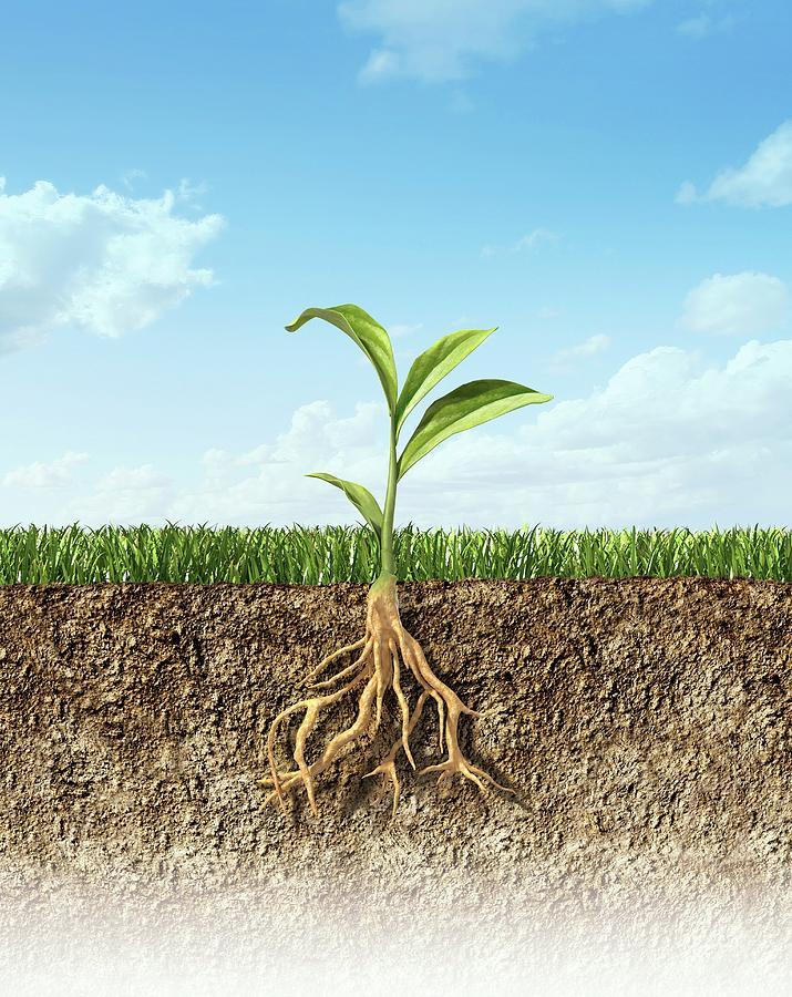 Plant, Artwork Digital Art by Leonello Calvetti