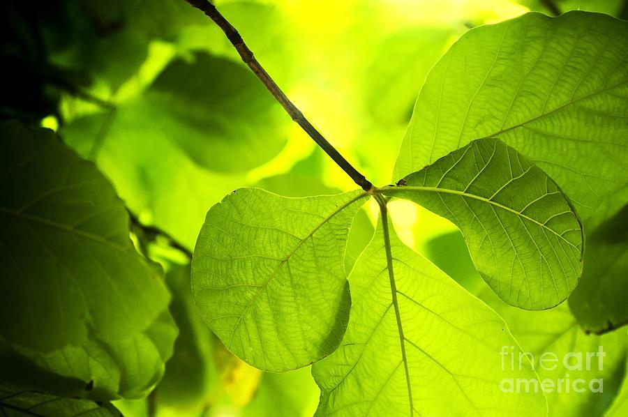 Plant Background Photograph